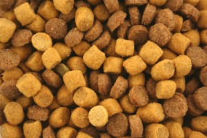 1019339-dry-cat-food-background-texture